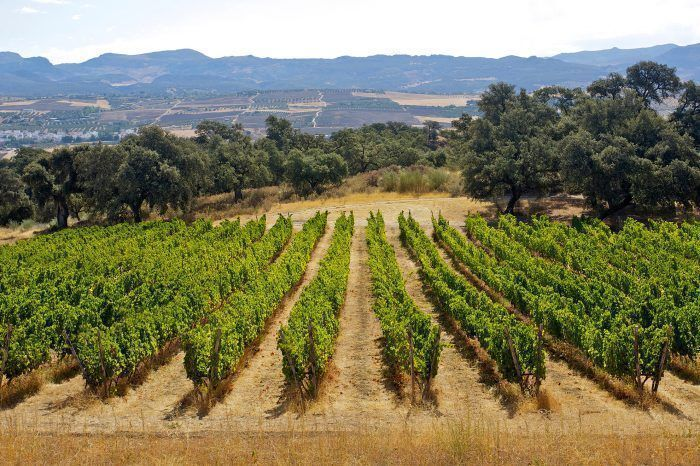Winery Tour with Tapas and Ronda Walking Tour