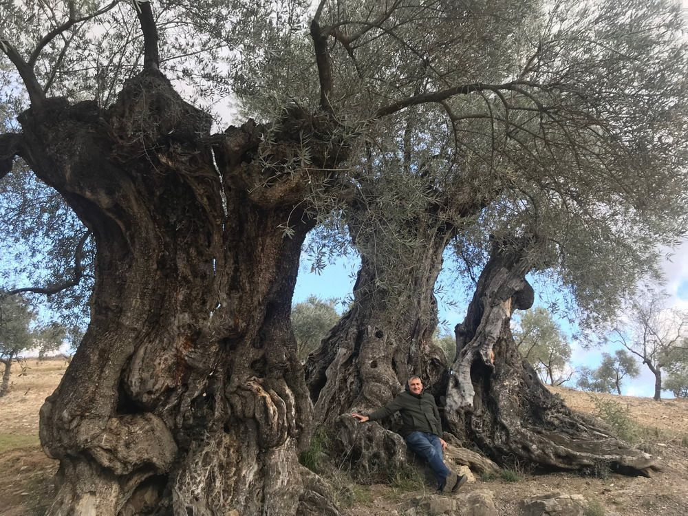 Private olive oil tour with full traditional breakfast and olive oil tasting included 9