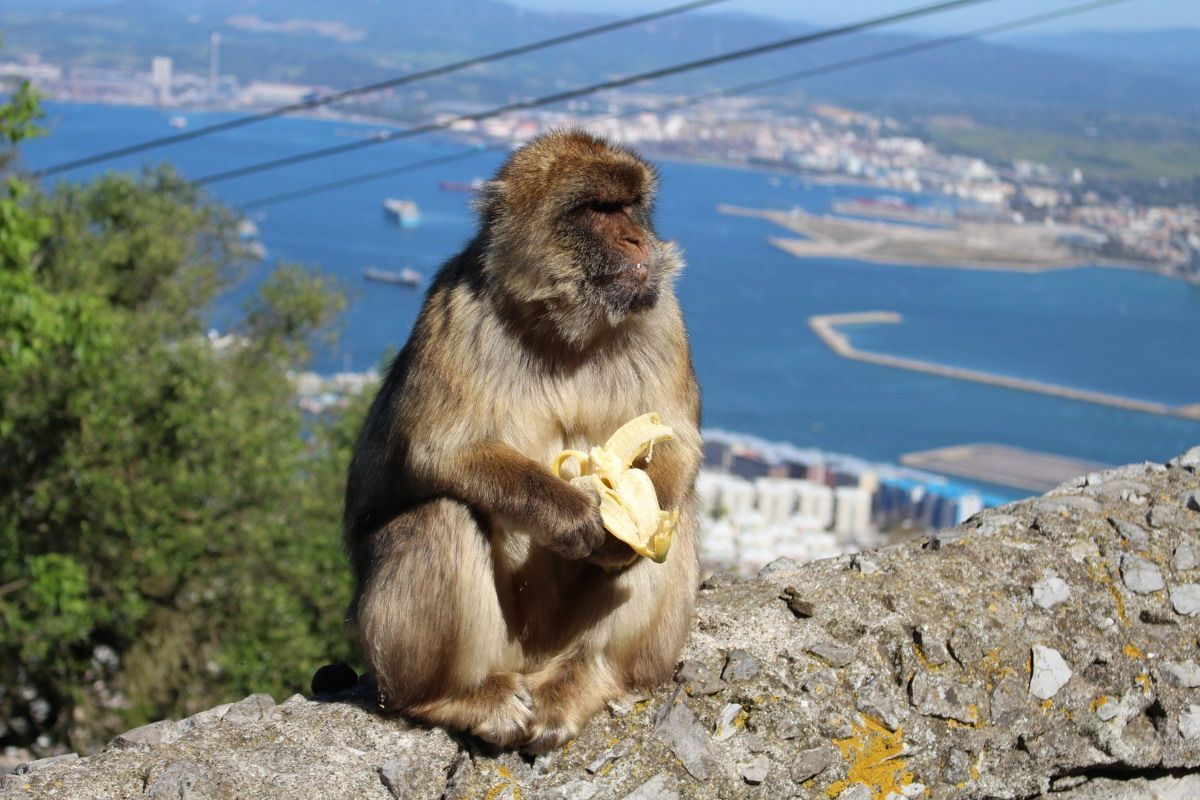 Private Full Day in Gibraltar from Malaga or Marbella 6