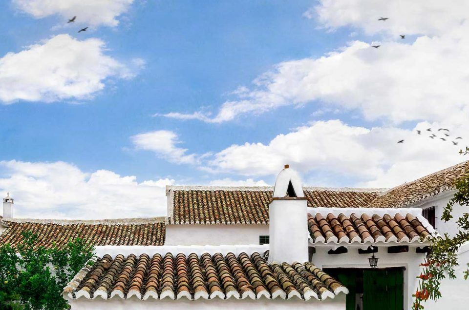 Olive Oil Experience in the Heart of Andalusia