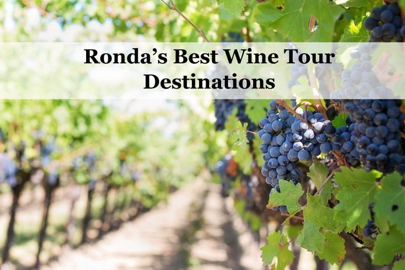Some of Ronda's Best Wine Tour Destinations