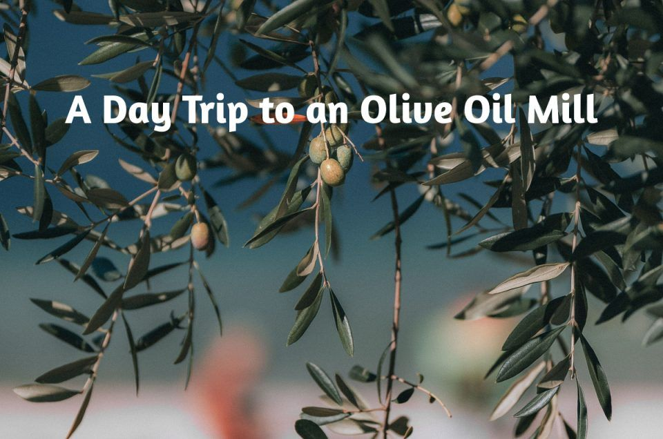 A Day Trip to an Olive Oil Mill (with your own car)