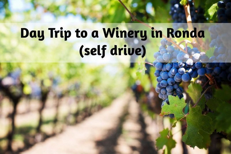 Day Trip to a Winery in Ronda (self drive)